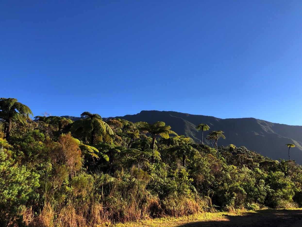 Randonnée à Takamaka | La Réunion