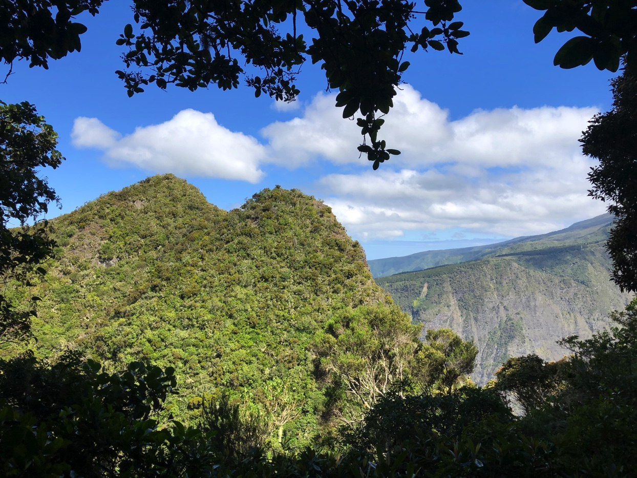 Randonnée au Dimitile par le sentier Bayonne   La Réunion